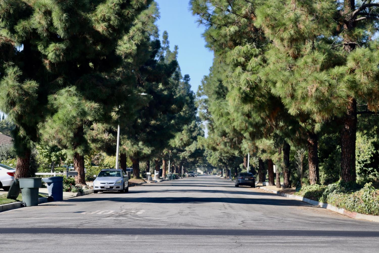 Claremont's abundance of trees is shown on Grand Ave., where both sides of the street are lined with pine trees.